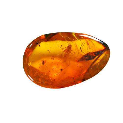 Jor-Specimen-Product 84